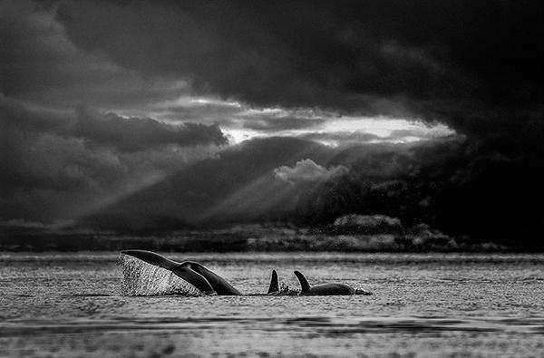 © Shane Russeck